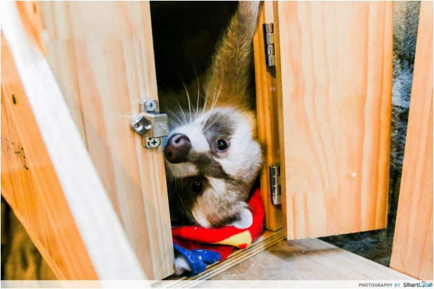 The Smart Local - Friendly raccoon at the Blind Alley