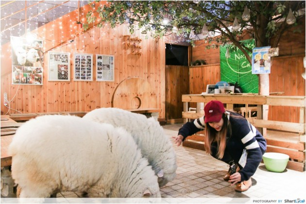 The Smart Local - Kimberly attempting a wefie with the two sheeps at Thanks Nature Cafe