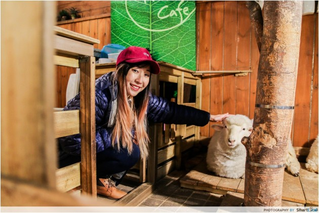 The Smart Local - Kimberly petting a sheep at the Thanks Nature Cafe which is a sheep and raccoon cafe