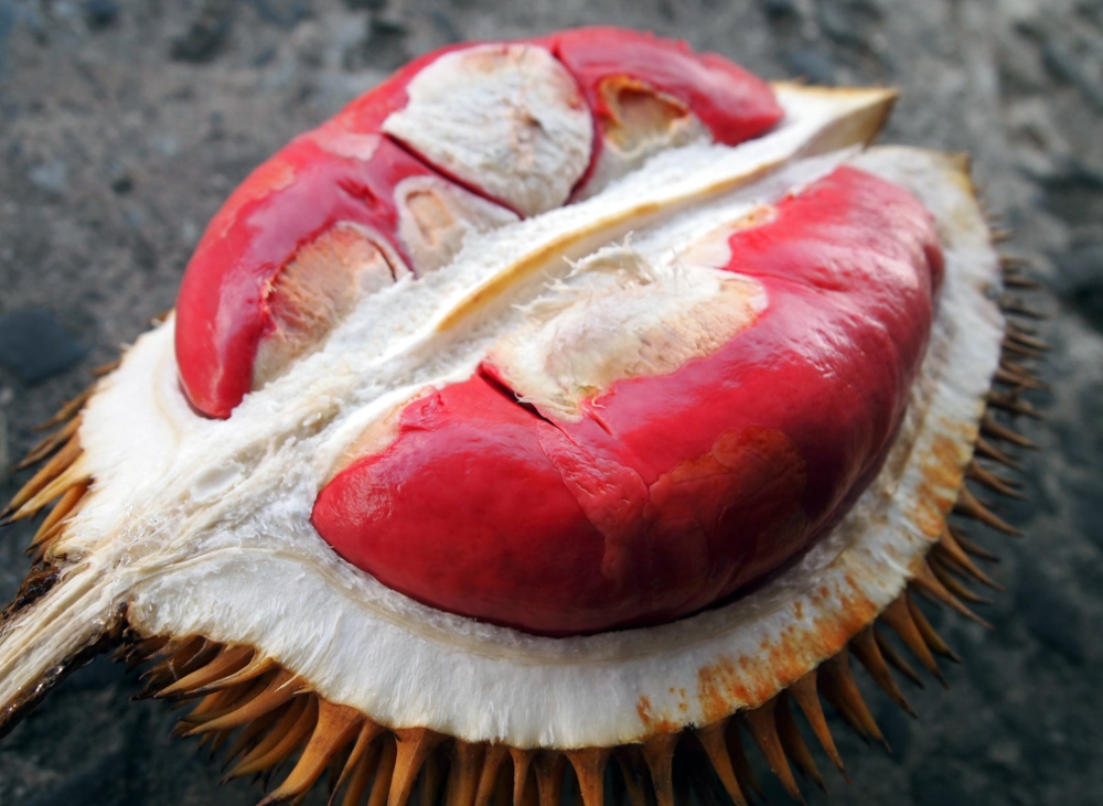10 Delectable Durian Dishes In Malaysia To Add To Your