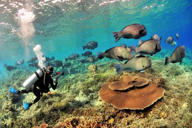 11 Lesser-Known Malaysian Dive Spots That You Need To Explore