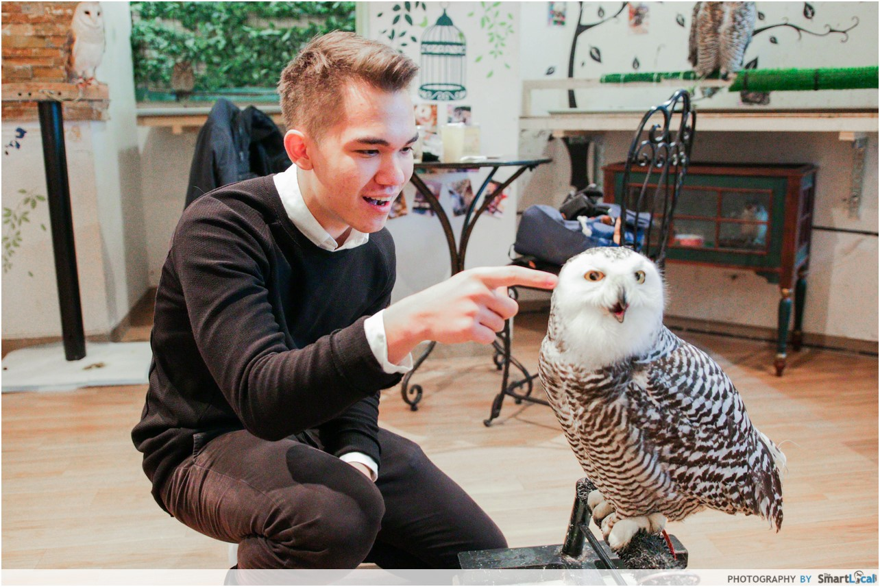 The Smart Local - Thomas petting an owl in the Lucky Owl Cafe