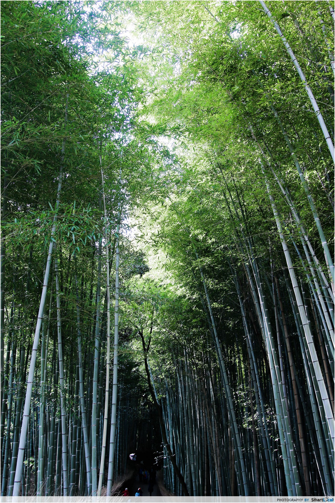 The Smart Local - Arashiyama Bamboo Forest