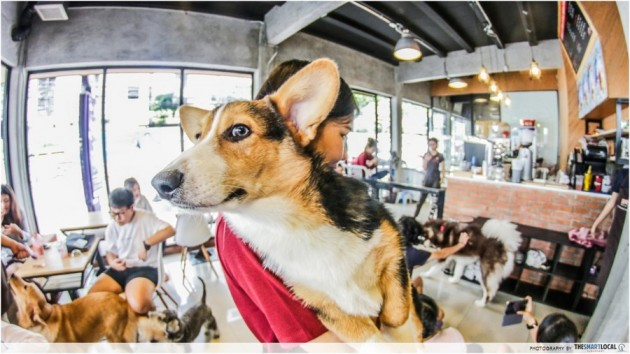House Of Paws Dog Cafe In Bangkok