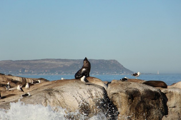 Seal and seagulls busking in the Sun