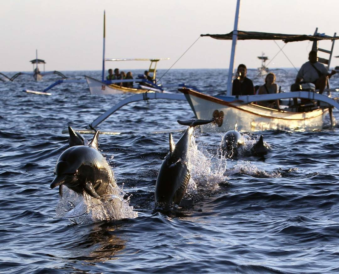 10 Places Nearest To Singapore For Extraordinary Encounters With Wild Dolphins