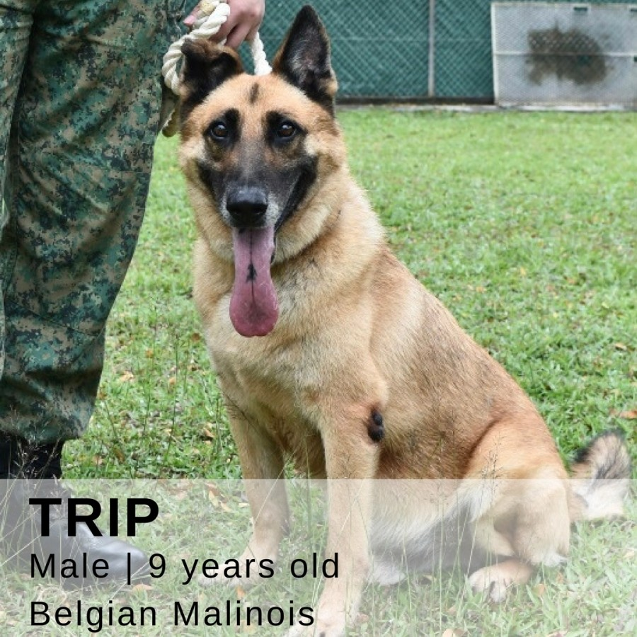 military dogs up for adoption