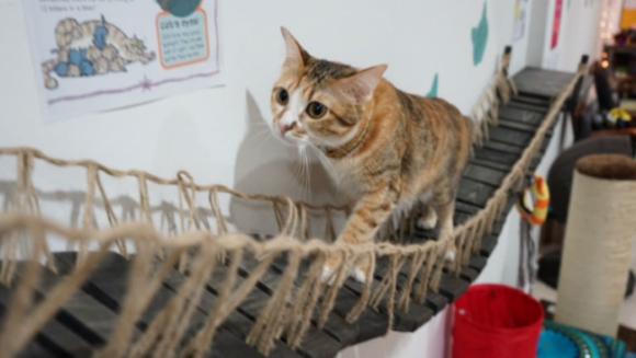 Cat museum