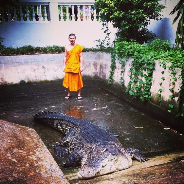 Crocodile in temple in Thailand's Chinatown