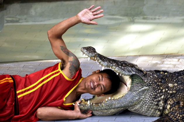 Crocodile shows Thailand