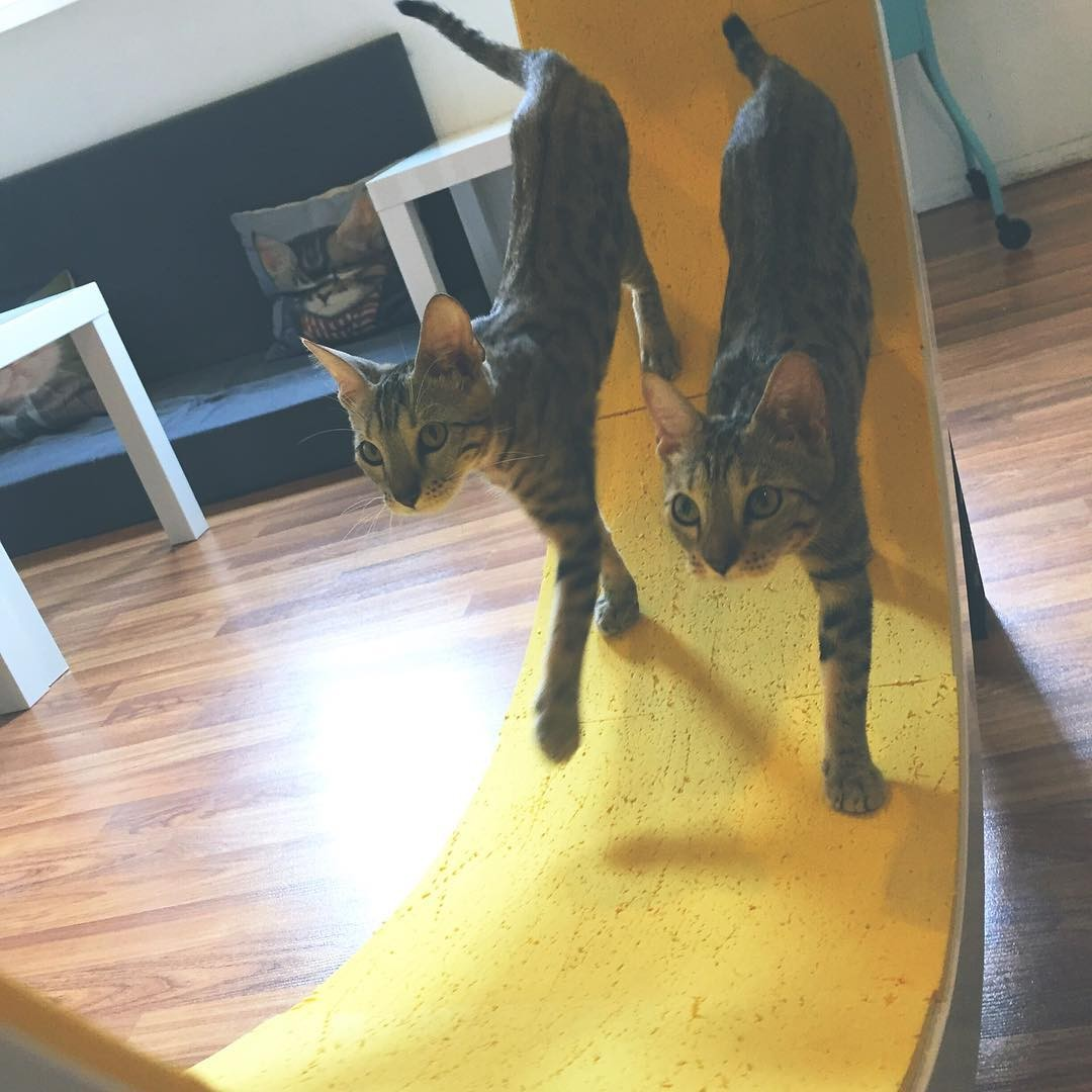 pet cafes in malaysia thesmartlocal