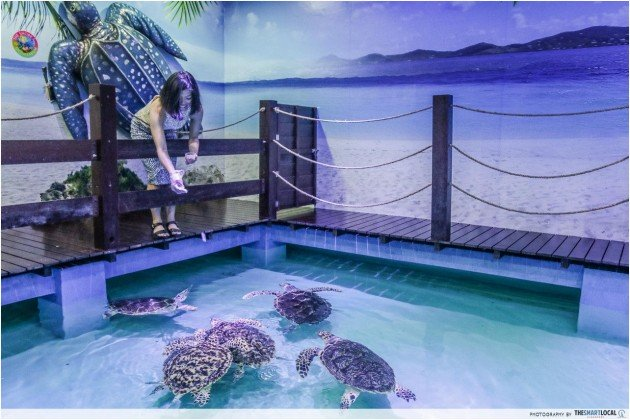 Shore Oceanarium Malacca Sea Turtles