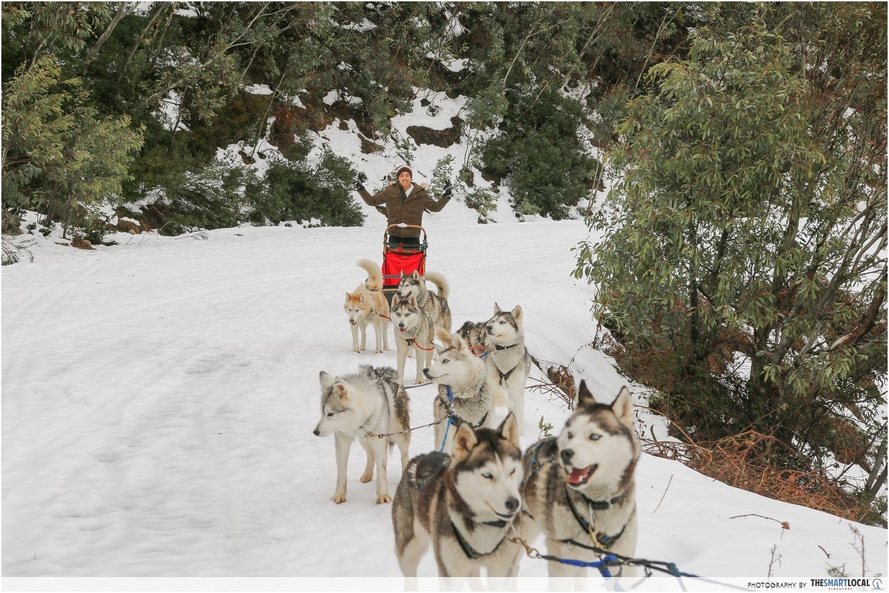 This Ski Resort In Melbourne Has A Siberian Husky Sled Ride