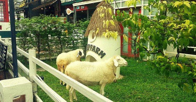 This Bangkok Sheep Village Is An Animal Lover's Dream Come True