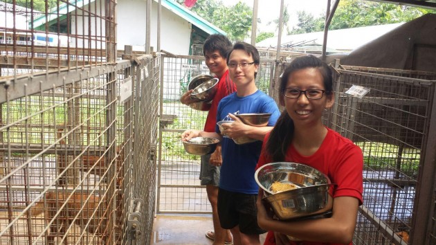 Donate to a dog shelter to feed rescued dogs during Giving Week