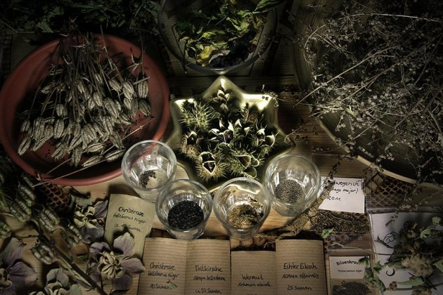 Herbs at Spellbound Witchcraft store Singapore