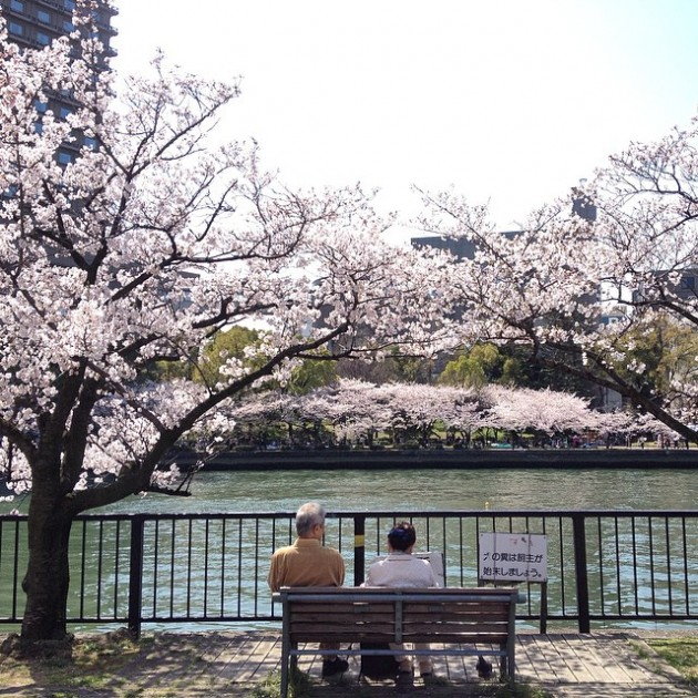 kema sakuranomiya okawa river romantic cherry blossoms