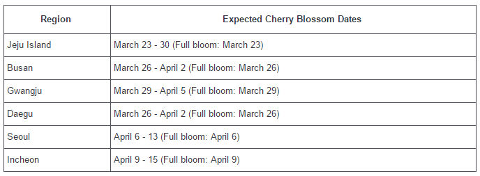 South Korean Cherry Blossom Season Dates