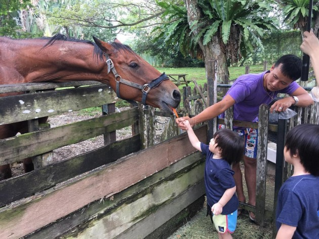 Feed the resident horse with carrots