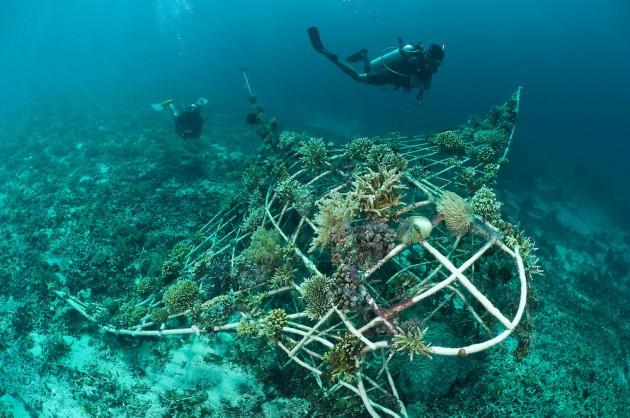 manta shaped artificial reef coral underwater sculpture