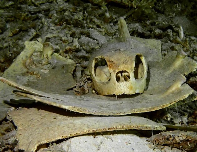 turtle cave graveyard sipadan skeleton creepy underwater