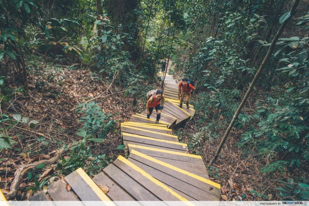 dairy farm trail steps summit bukit timah nature reserve