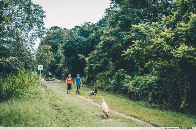 green corridor trekking dog walking bukit timah