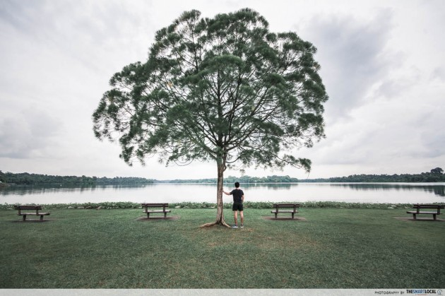 upper seletar reservoir park symmetrical tree wedding