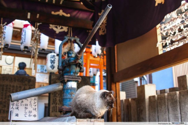 osaka shrine cat