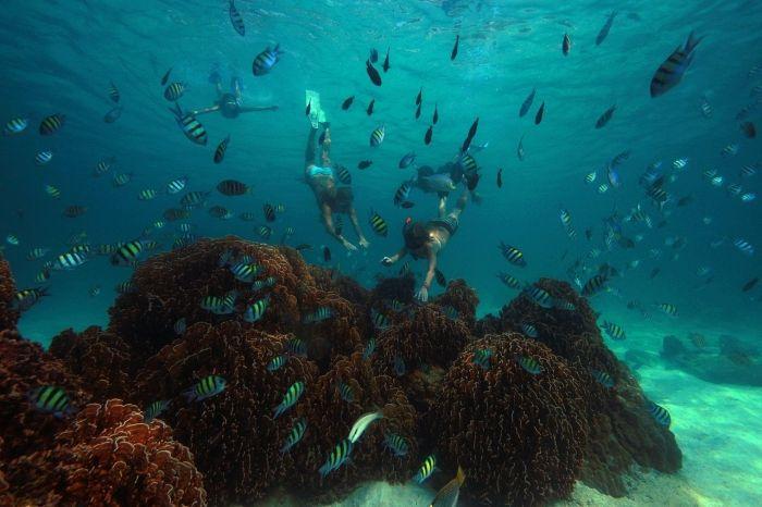 Snorkelling at Koh Kood Island