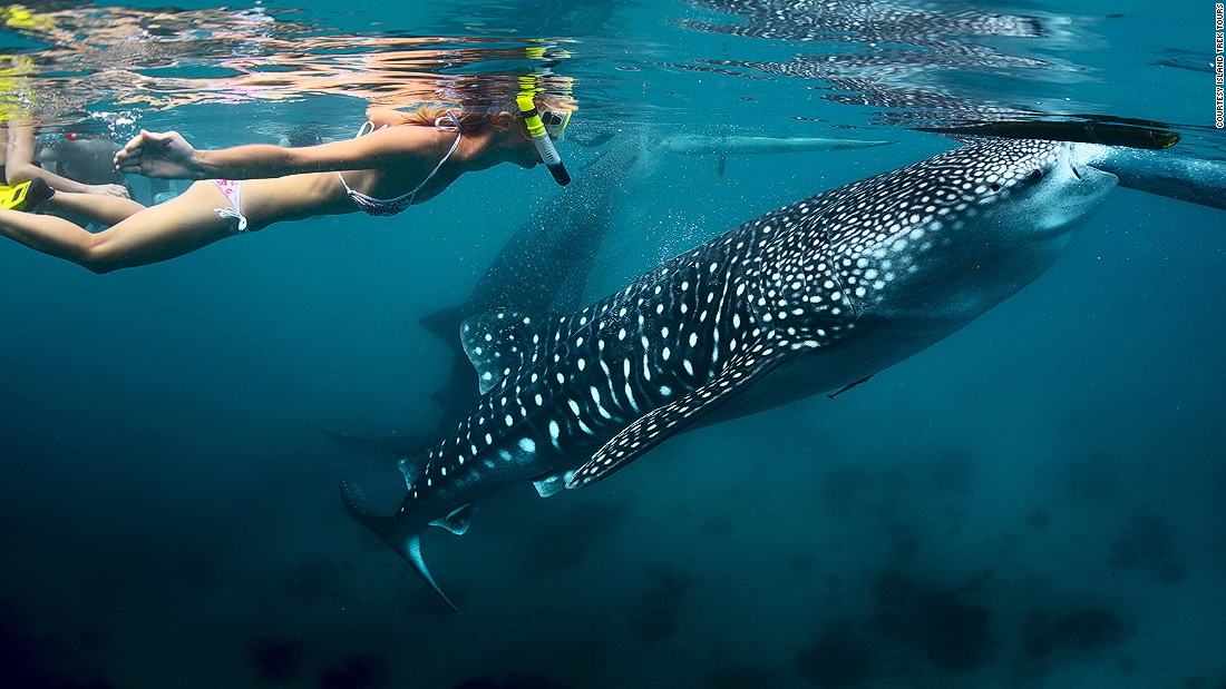 donsol snorkel whale sharks philippines