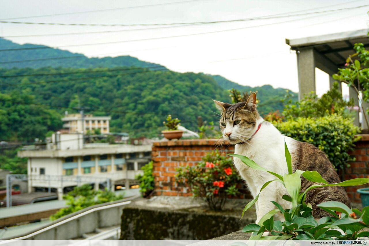 Cheap Taipei - Cute Cat