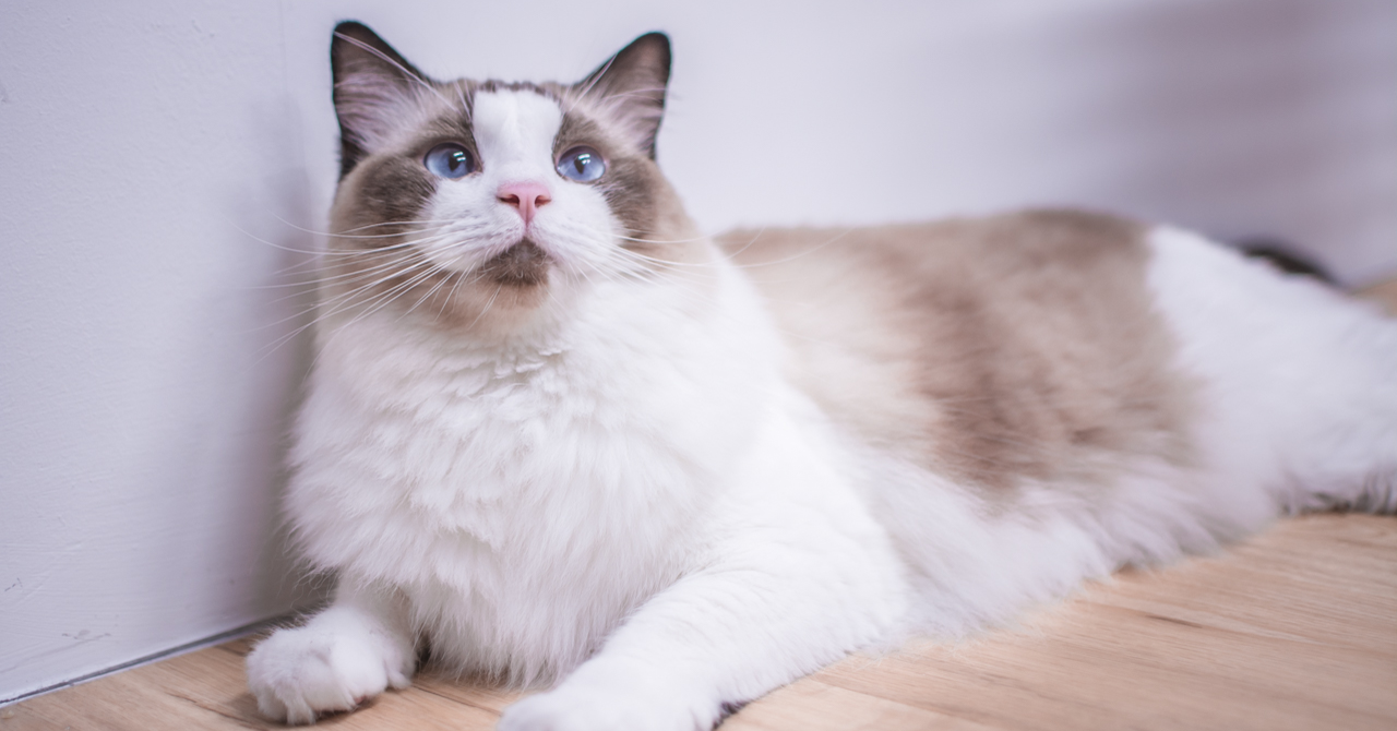 6 Tips To Increase Your Cat's Life Span Beyond 9 Lives