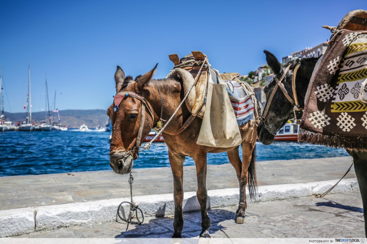 hydra island greece donkey transport