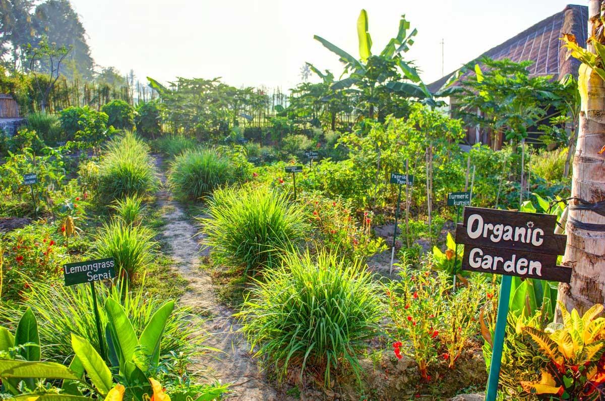 Bali Eco-Resorts - Floating Leaf Organic Garden