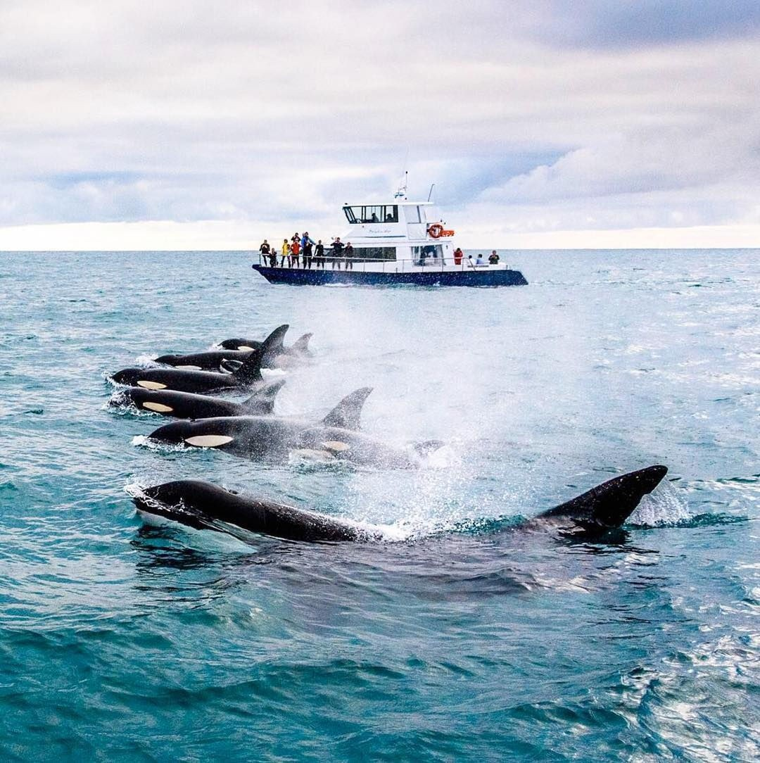 whale watching cruise kaikoura new zealand
