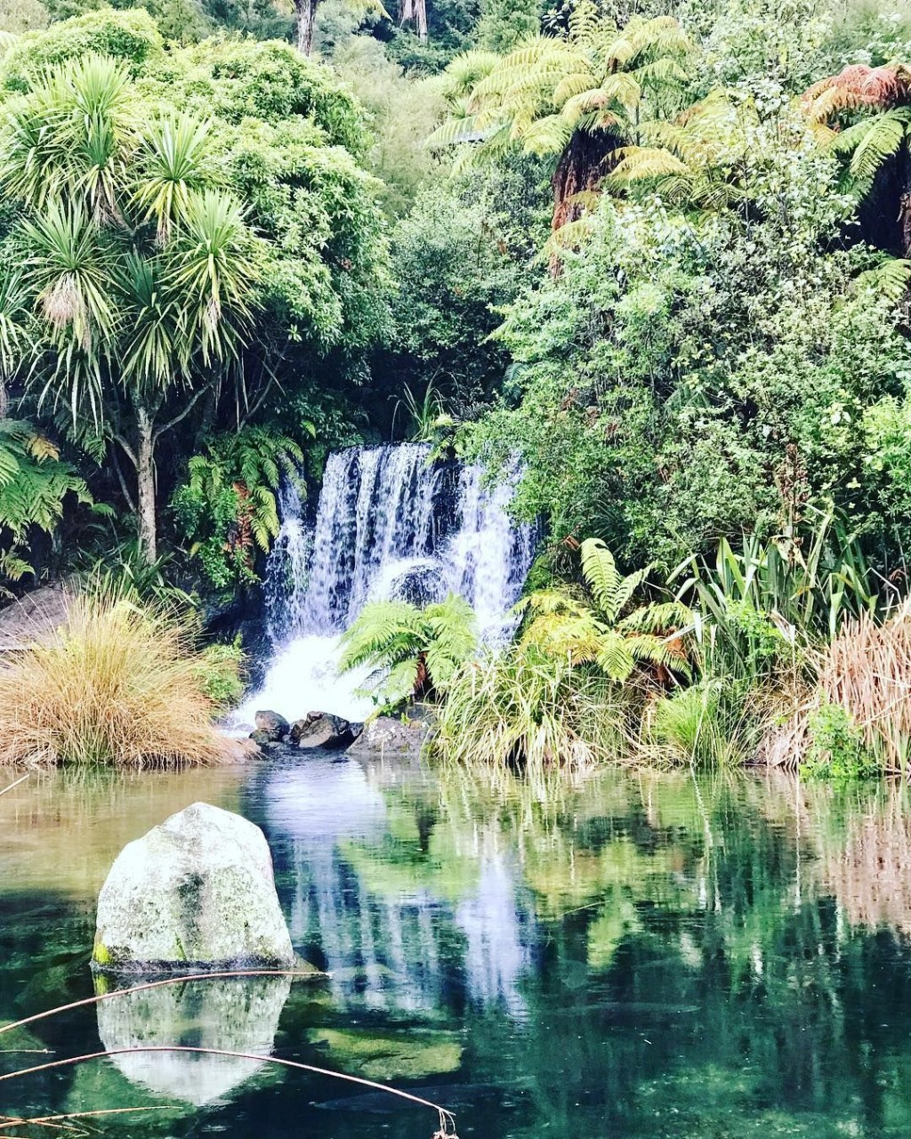 rainbow springs nature park new zealand