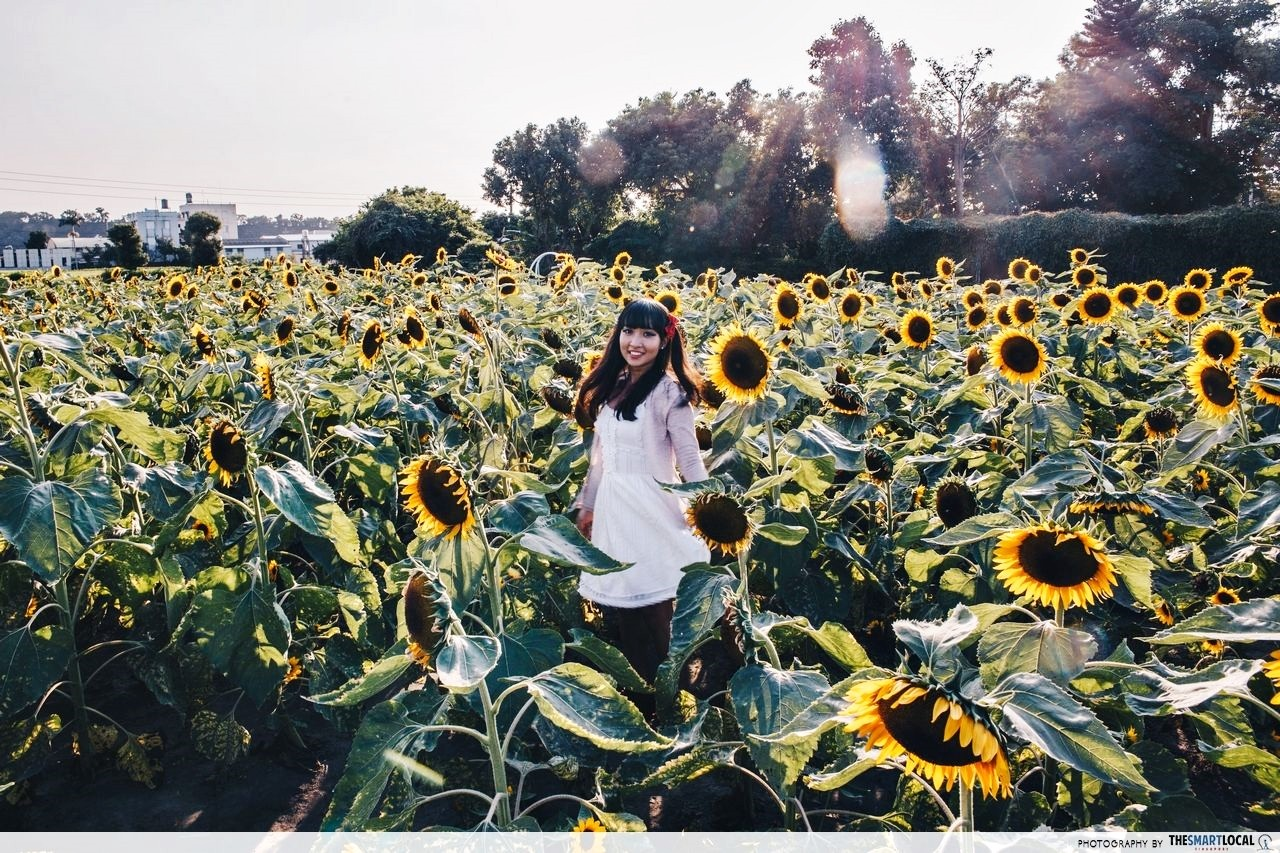 Zhong She Flower Market Taichung sunflowers