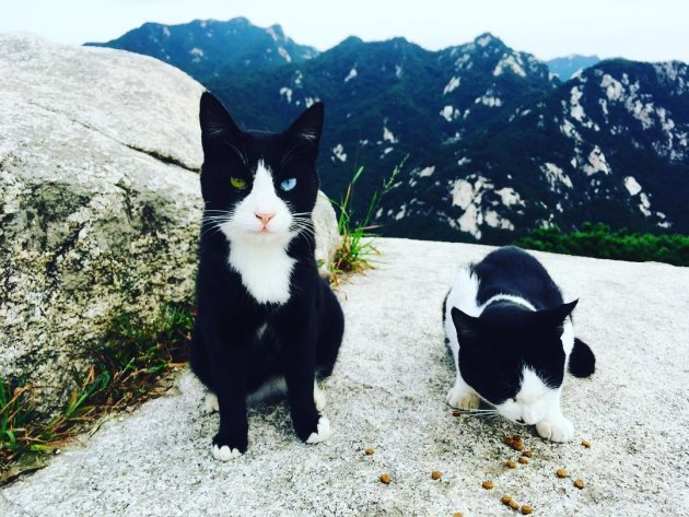 Residents cats on the mountain
