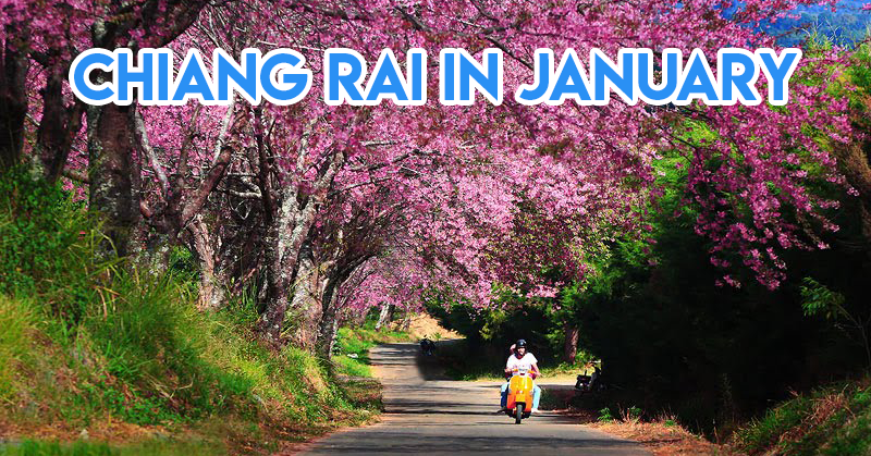 10 Secret Sakura Spots In Thailand To Explore In December & January