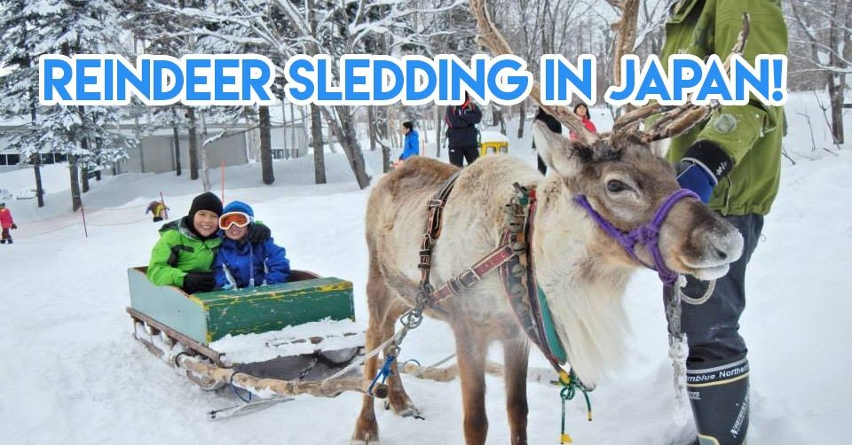 reindeer sledding in japan