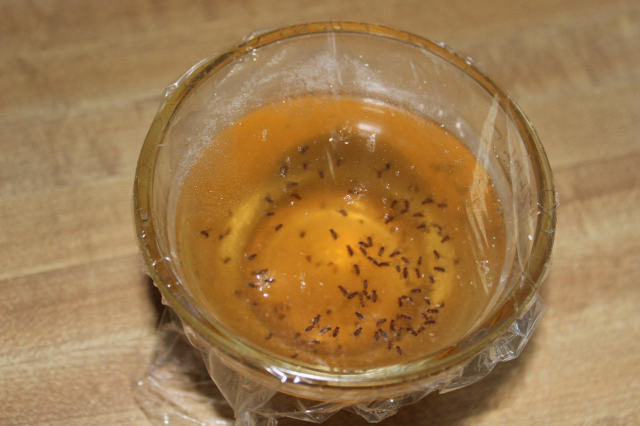 fruit fly diy trap