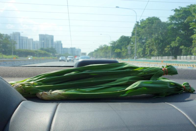 pandan leaves for roaches