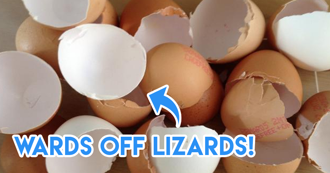 eggshells for lizards