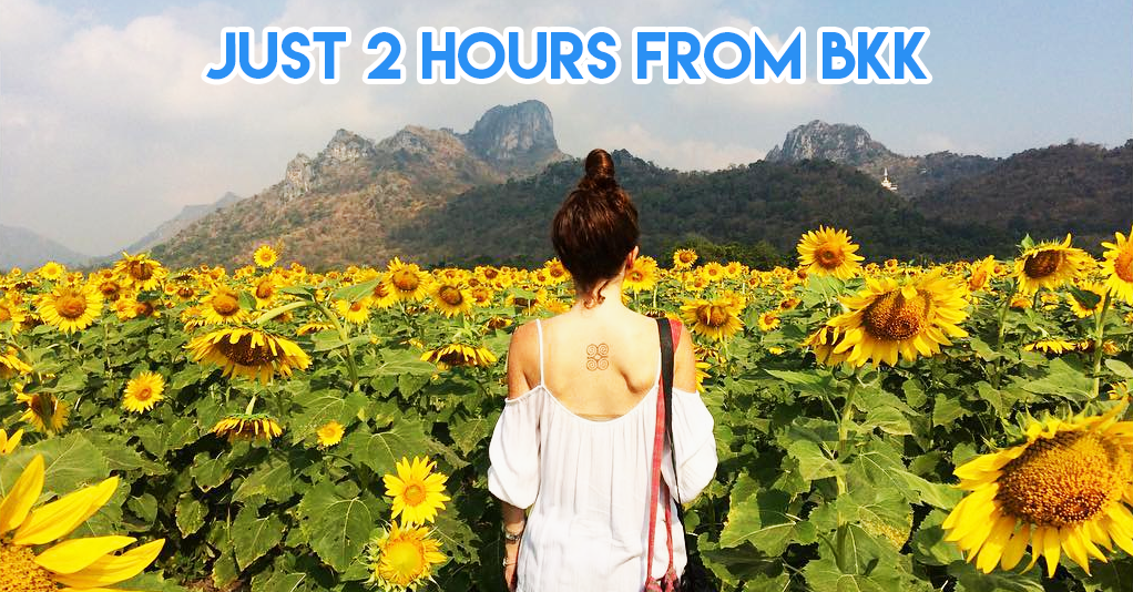 9 Epic Flower Fields In Thailand For Hokkaido-Level Photo Shoots