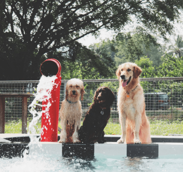 Sunny Heights dog-friendly pool Singapore