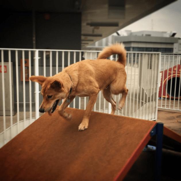 k9 park obstacle course dog playground nex