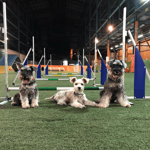 Singapore Indoor Dog Agility Arena