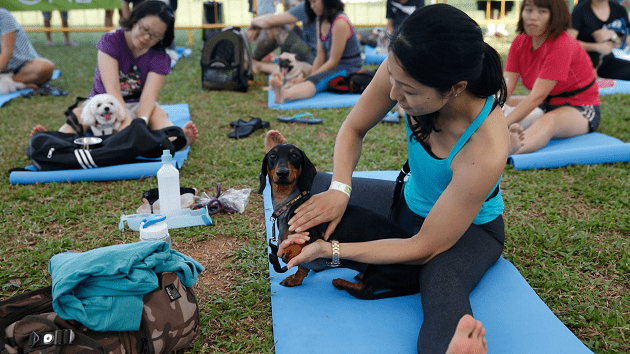 dog yoga doga Singapore