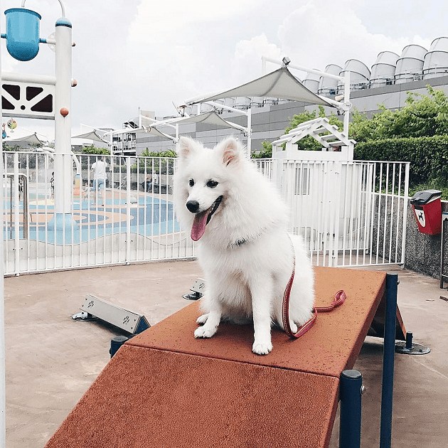 k9 park obstacle course dog playground nex